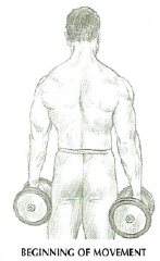 dumbbell shrugs back anatomy