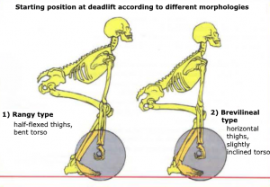 morphology deadlift