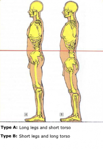 anatomy body squat morphology knee big belly