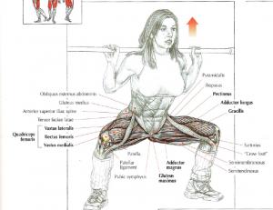 power squat