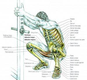stretching squat