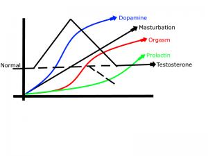 chart masturbation dopamine orgasm prolactin testosterone