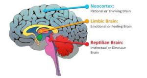 reptilian limbic neocortex brain