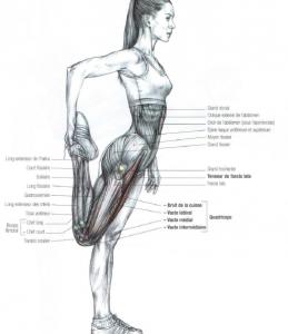 quadriceps stretching