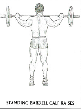standing barbell calf raise