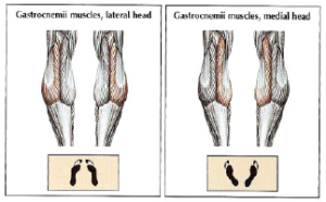 gastrocnemius medial lateral