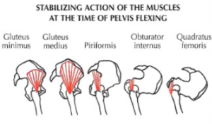 good morning leg exercise pelvis stabilization