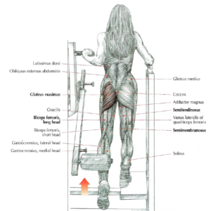 machine hip extensions