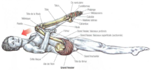 stretching gluteus maximus hamstrings