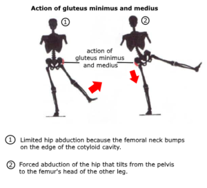 hip mobility abduction