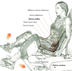 seated machine hip abductions