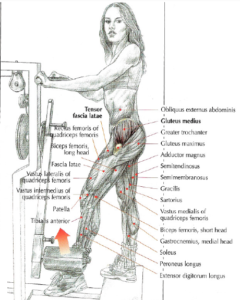 standing machine hip abduction gluteus medius